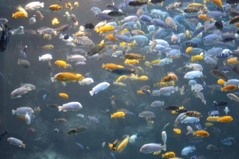 Zoo toronto (et ses environs) Dsc_0419