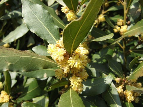 arbres en fleurs au printemps Laurie10