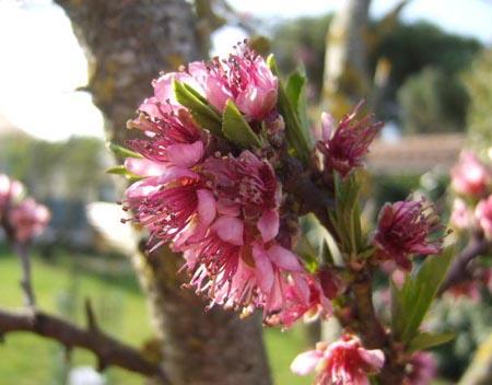 arbres en fleurs au printemps Pacher10