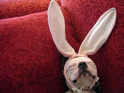 Salut à tous!! Dog-ra10