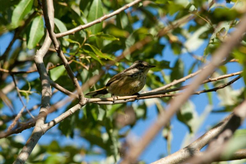 I.d. Petit oiseau Img_5014