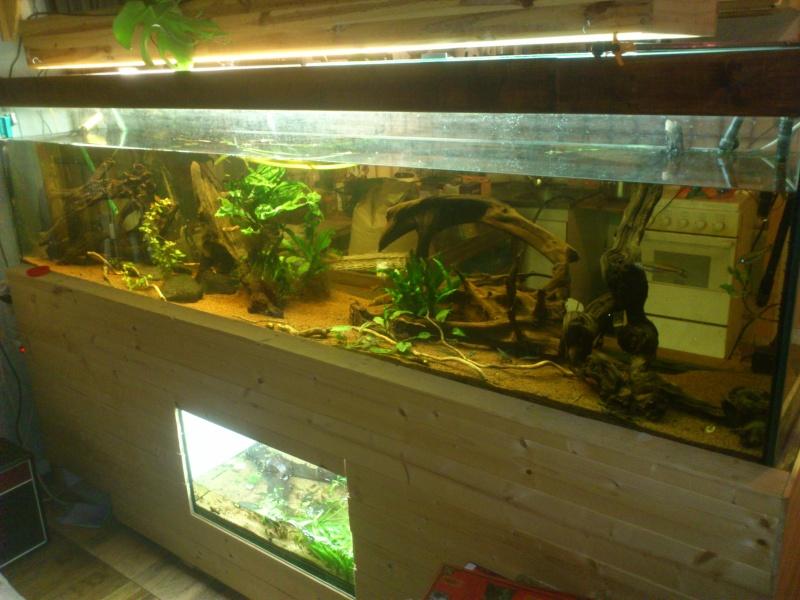 kej aquariumsssssssss!! - Page 8 Dsc_0810
