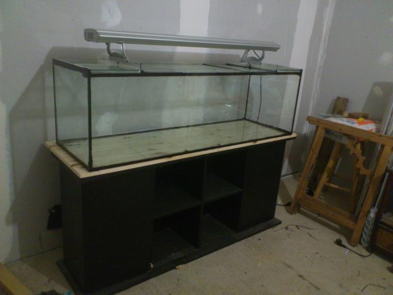 kej aquariumsssssssss!! - Page 8 Dsc_0818