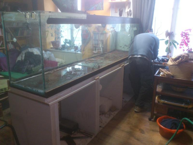 kej aquariumsssssssss!! - Page 8 Dsc_0915