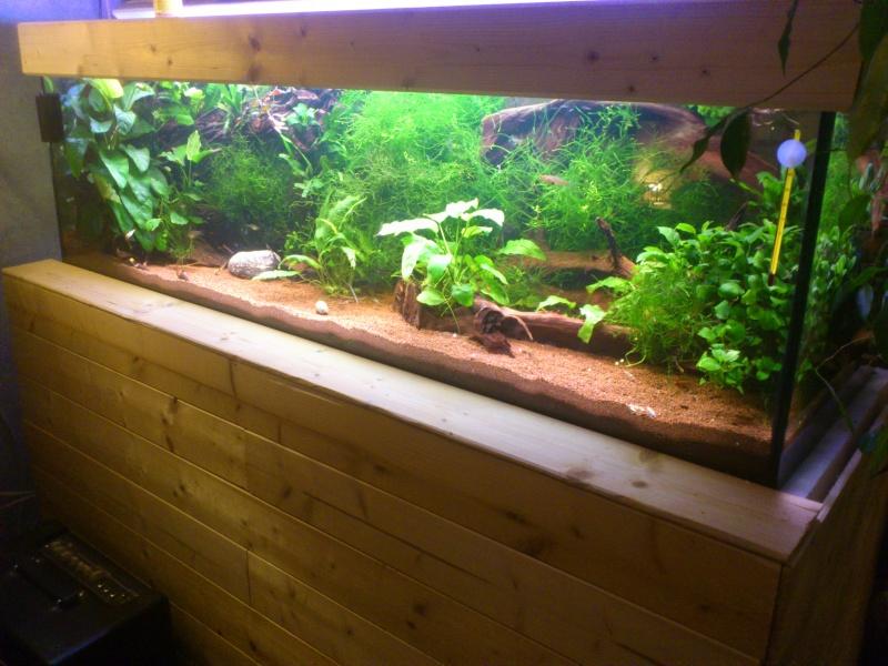 kej aquariumsssssssss!! - Page 8 Dsc_0922
