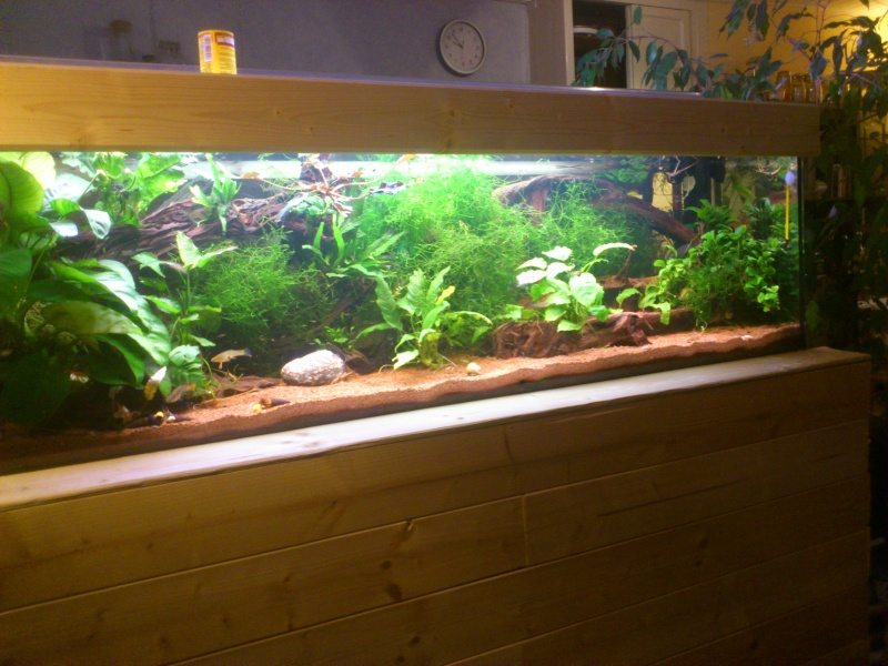 kej aquariumsssssssss!! - Page 8 Dsc_0923