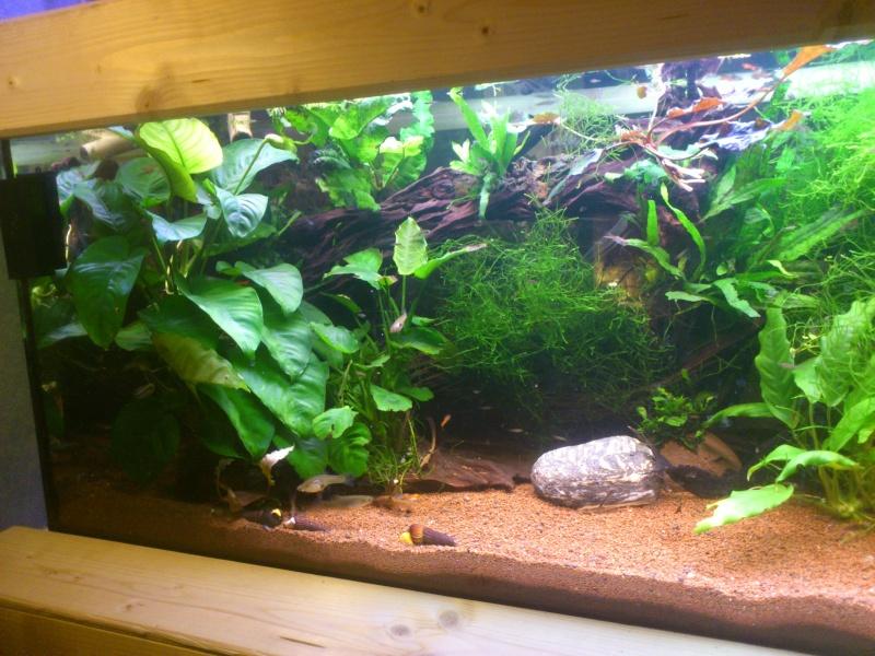 kej aquariumsssssssss!! - Page 8 Dsc_0924