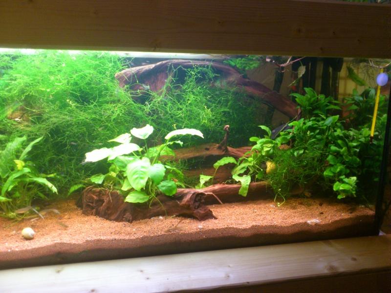 kej aquariumsssssssss!! - Page 8 Dsc_0925