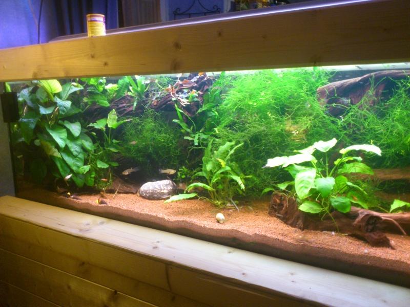 kej aquariumsssssssss!! - Page 8 Dsc_0926