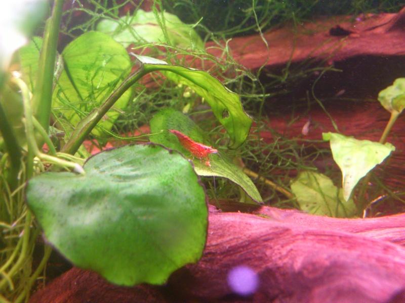 kej aquariumsssssssss!! - Page 8 Dsc_0927
