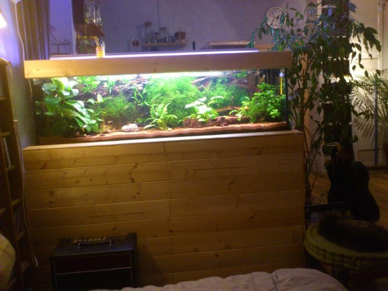 kej aquariumsssssssss!! - Page 8 Dsc_0929