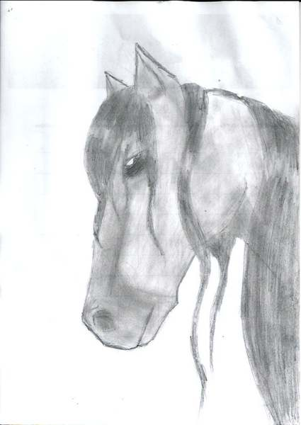 [Dessins] Animaux Cheval10