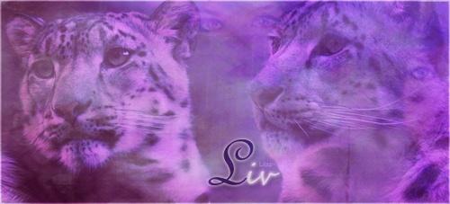 [Créas] Novembre 2010 Liv2_b10