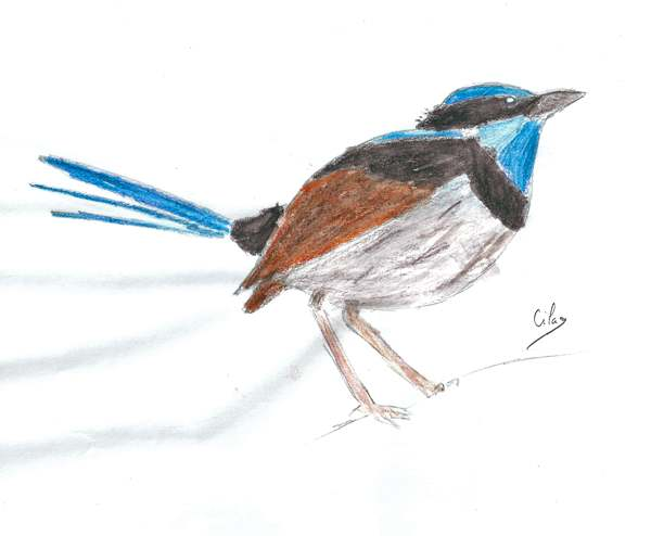 [Dessins] Animaux Oiseau10