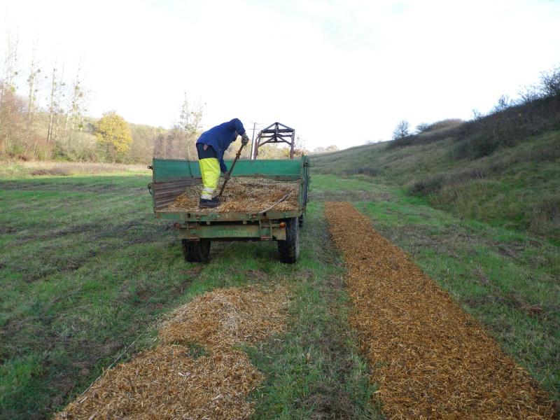 La permaculture du cagouillard Imgp1020