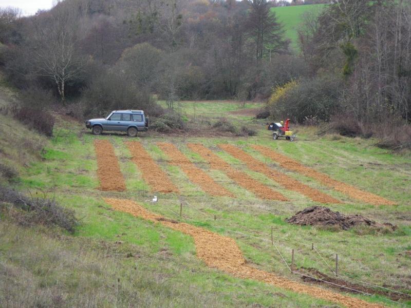 La permaculture du cagouillard Imgp1021