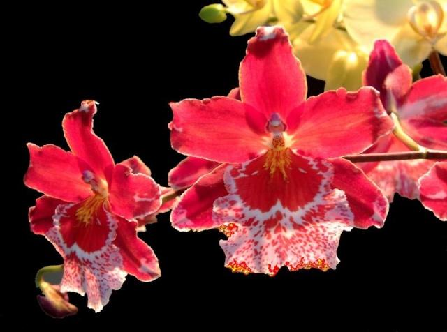 Félicitations à la photo du mois de mars - Page 2 Orchid10