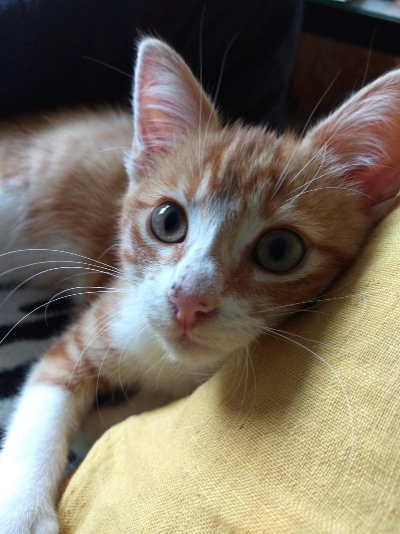 Voici Olaf..... Img_2010