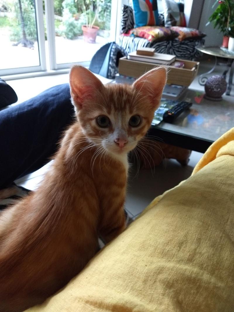 Voici Olaf..... Img_2011