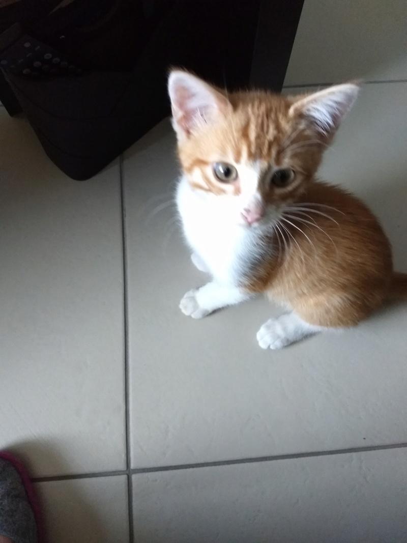 Voici Olaf..... Img_2012