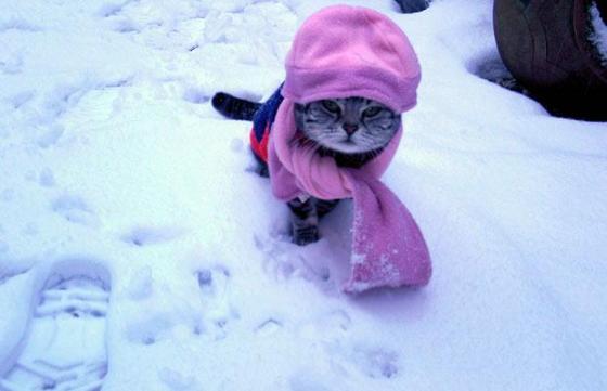 Pauvre chat-peron rouge de honte Habit-11