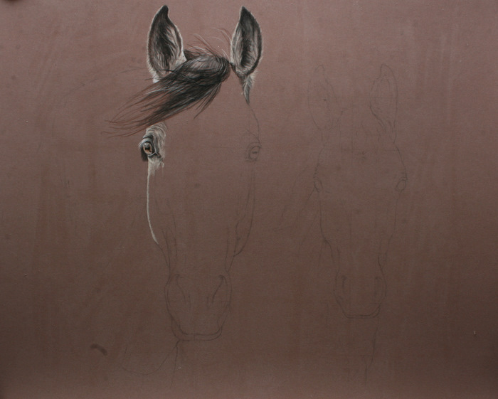 Marion Tubiana - Pastel et Photographie  002110
