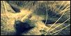 The Magies Cats Ardois10