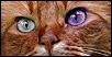 The Magies Cats Kima10