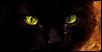 The Magies Cats Lena10