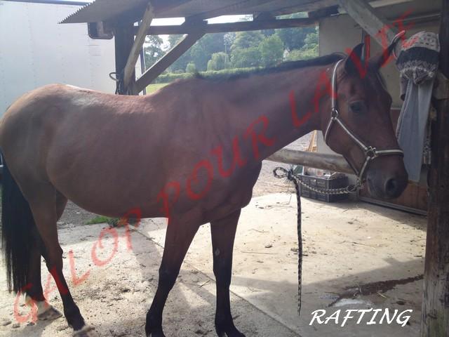 Rafting - TF hongre - Placé hors association 10062011