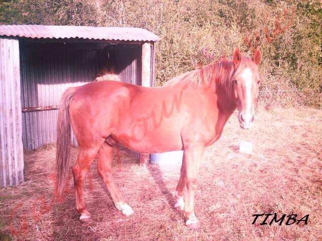 TIMBA - ONC selle né en 1993 - Adopté en octobre 2011 par gladys 226hdi10