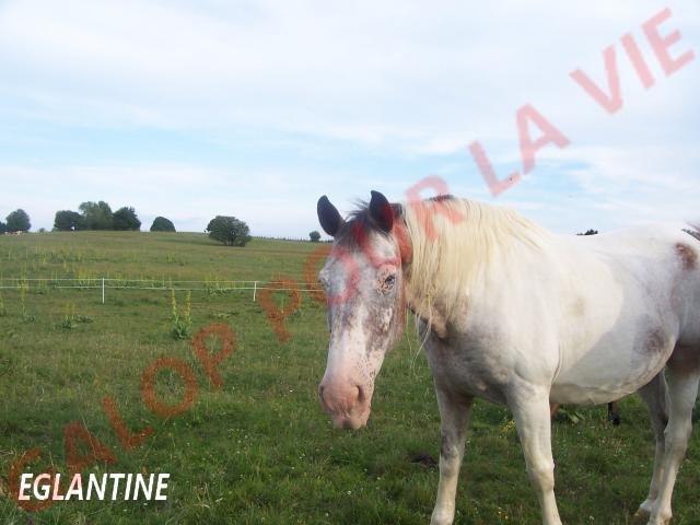 EGLANTINE - ONC selle typée Appaloosa née en 1993 - adoptée en août 2011 par anne-canelle 73223910