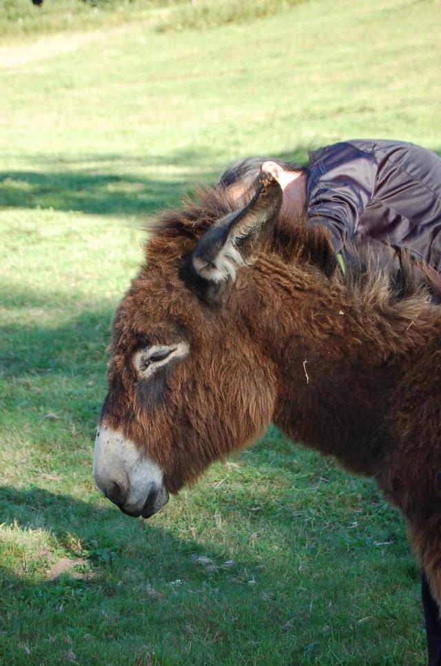 BOURRIFEE, renommée JOSETTE  - ONC âne née en 2010 - adoptée en août 2011 par Stephele12 Dsc_0028