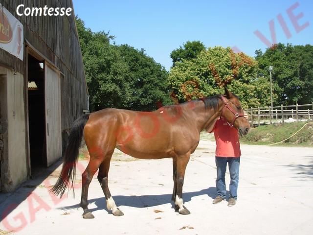 COMTESSE - SF née en 1990 - adoptée en juillet 2011 par Françoise  Dscn1710