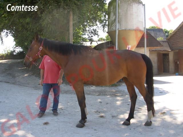 COMTESSE - SF née en 1990 - adoptée en juillet 2011 par Françoise  Dscn1713