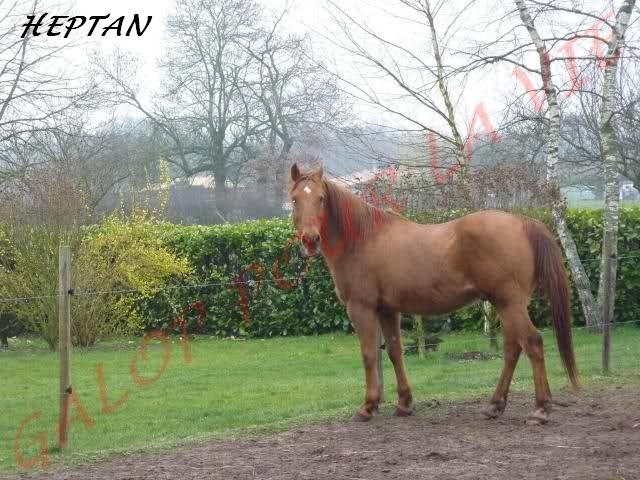 HEPTAN - DSAr né en 1995 - placé hors association K0knzl10