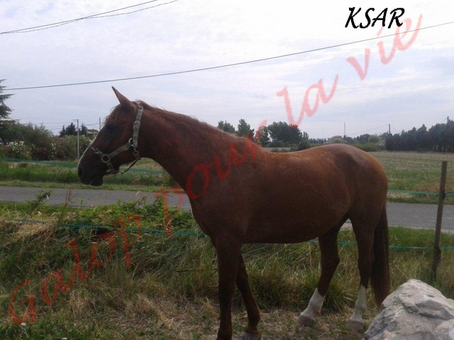 KSAR -  TF né en 1998  - adopté en août 2011 par anne-claire Ksar__12