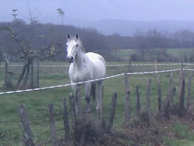 MANDINO - SF né en 2000 - adopté en décembre 2011 Mand810