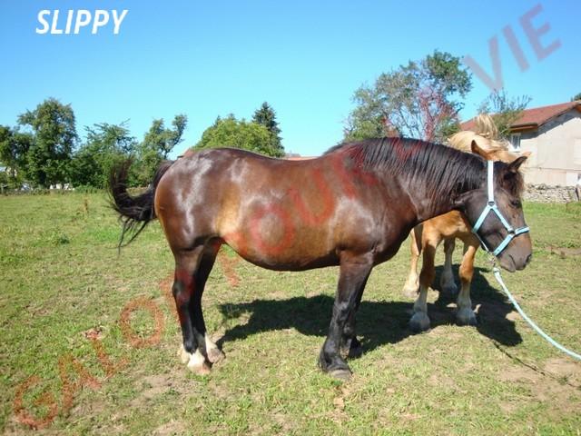 SLEEPY - ONC Trait née en 1998 - adoptée en août 2011 par Sylvie Slipy110