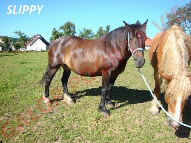 SLEEPY - ONC Trait née en 1998 - adoptée en août 2011 par Sylvie Slipy310
