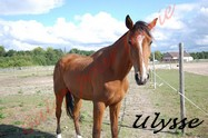 ULYSSE - TF né en 2008 - adopté en août 2011 par agozillon Ulysse11