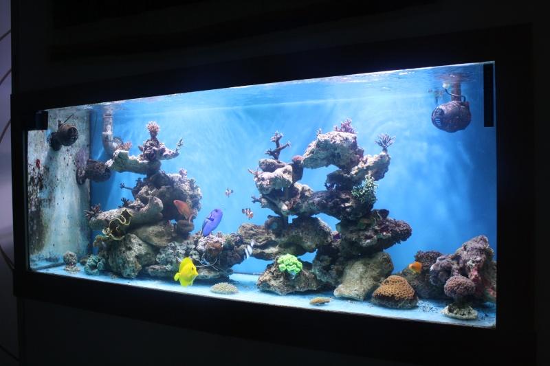 PV dans la decante Aqua_012