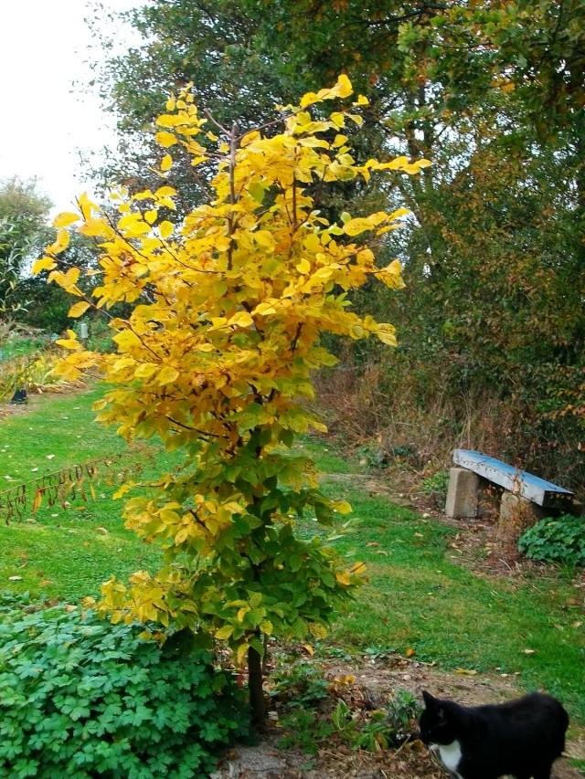 19 -  Concours 'Champignons&couleurs d'automne'......photos reçues !!! - Page 2 1er_no10