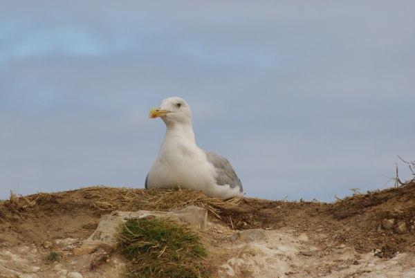 18 - Concours.........L'oiseau.........photos reçues !!! 57915110