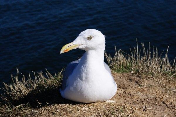 18 - Concours.........L'oiseau.........photos reçues !!! 57915210