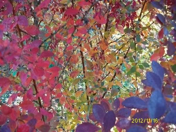 28 - Couleurs d'automne !!! - Page 2 Automn19