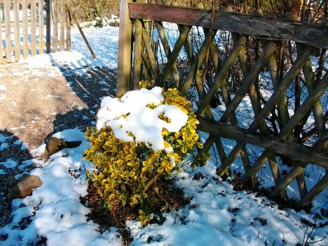 21 - Paysages d'hiver.........photos reçues !!! - Page 5 Fev-fr12