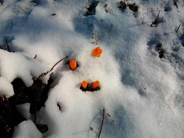 21 - Paysages d'hiver.........photos reçues !!! - Page 5 Fev-fr13