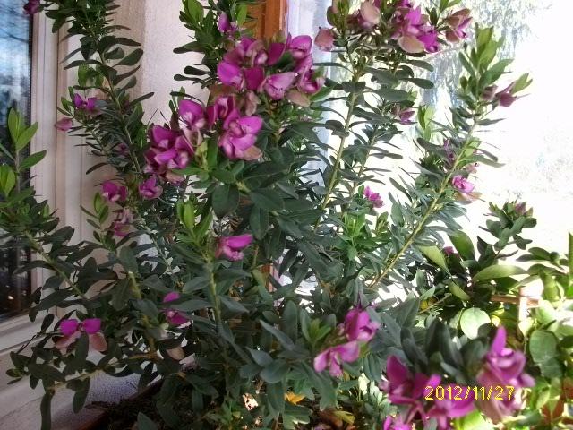 floraisons automnales Novemb27