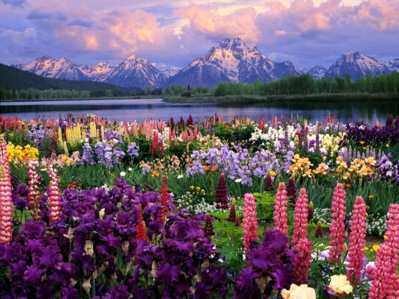 """Bonjour à tous Dieu nous bénit en ce 7 Février : Dieu est  """"consolation"""" 1cf3m510"""